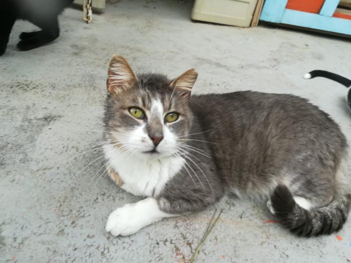 Arturo - gato en adopción