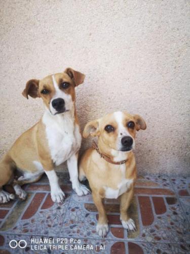 Aurora - perro en adopción