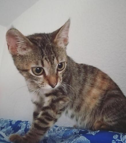 Bambú* - gato en adopción