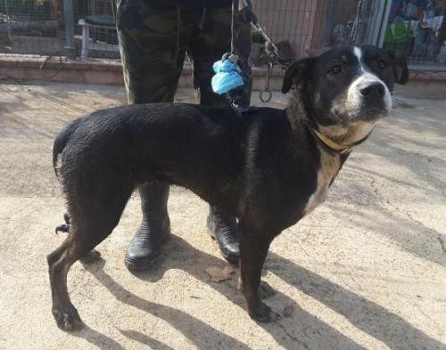 Cash - perro en adopción