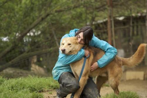 Calimero - perro en adopción