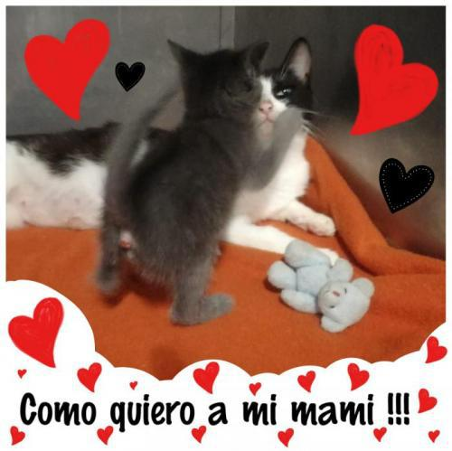 Caty y lucas - gato en adopción