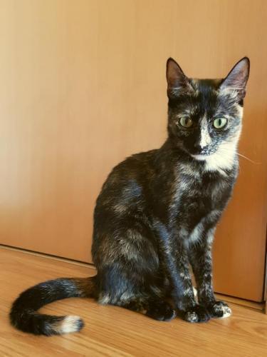 Félina* - gato en adopción