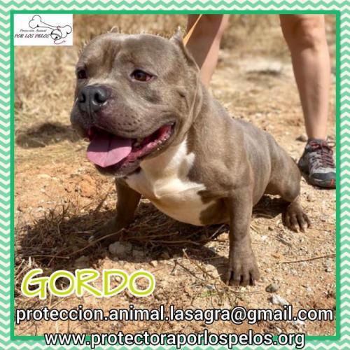 Gordo - perro en adopción