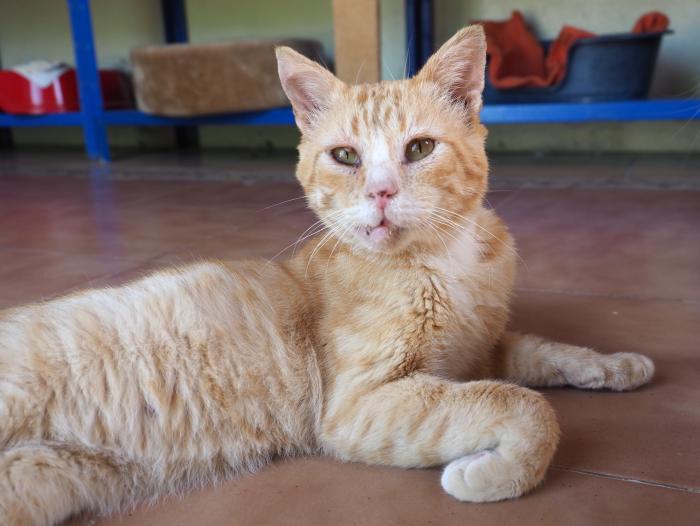 Júpiter - gato en adopción