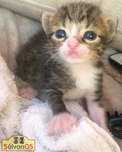 Julia - gato en adopción