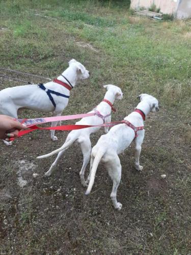 Julia - perro en adopción
