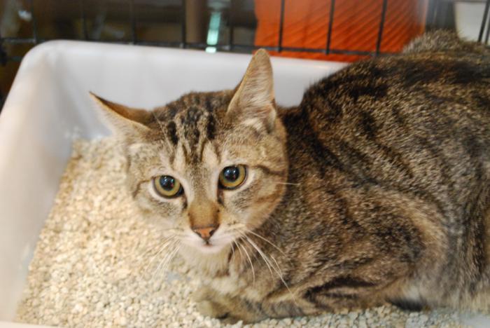 Kovi - gato en adopción