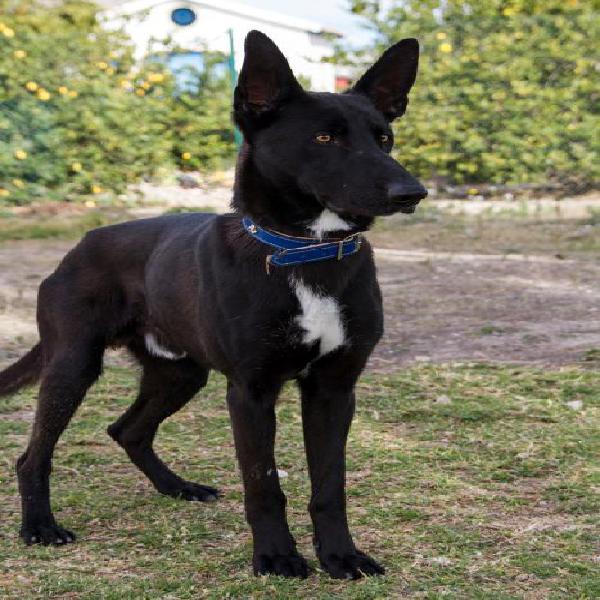 Loto - perro en adopción