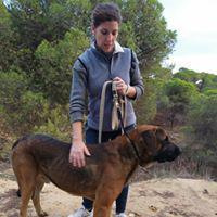 Máximo - perro en adopción