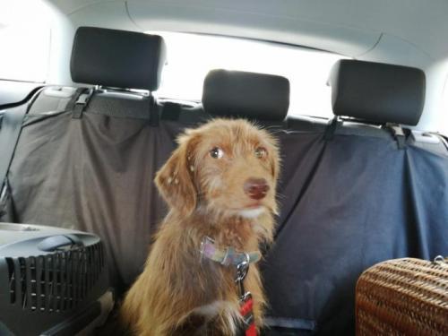 Mika - perro en adopción