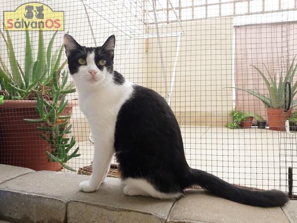 Minnie - gato en adopción