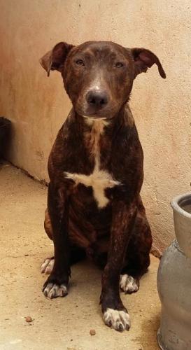 Nº 1514 - perro en adopción