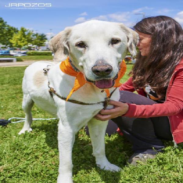 Perla - perro en adopción