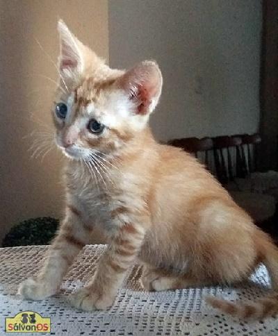Rob - gato en adopción
