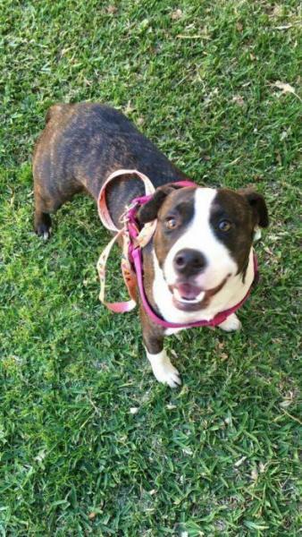 Rocket - perro en adopción