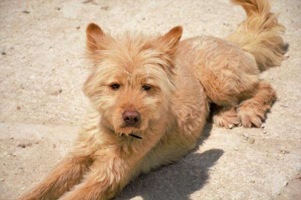 Rubia - perro en adopción