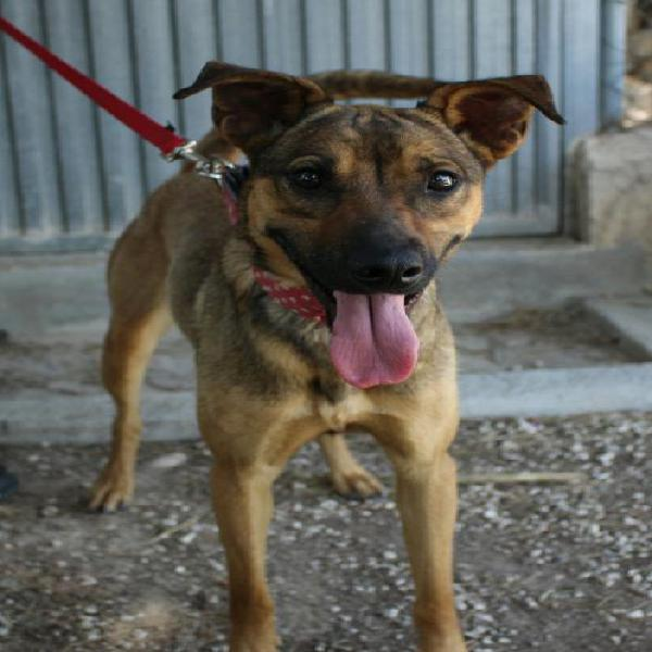 Silvana - perro en adopción