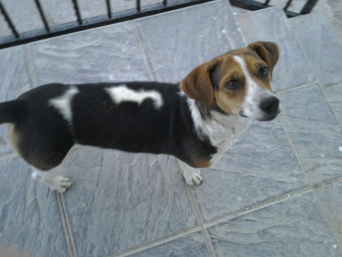 Urgente, está en la calle - perro en adopción