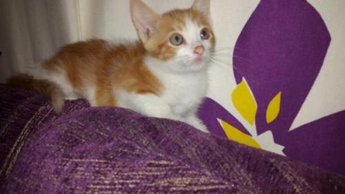 Kiki - gato en adopción