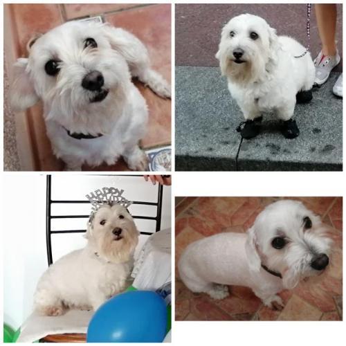 Guau* - perro en adopción