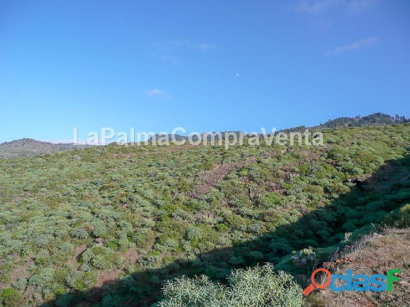 ID 424 Gran terreno en la zona noroeste de la isla de la Palma, en Lomada Grande Garafia, con una m 7