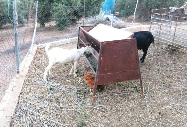 Demanda de nave para cabras y ovejas en córdoba