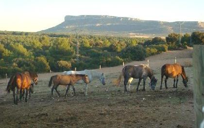 Venta de explotación agrícola y ganadera en valencia