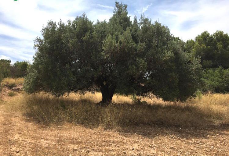 Venta de explotación agricola y ganadera en valencia