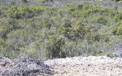 Venta de finca de caza mayor en badajoz