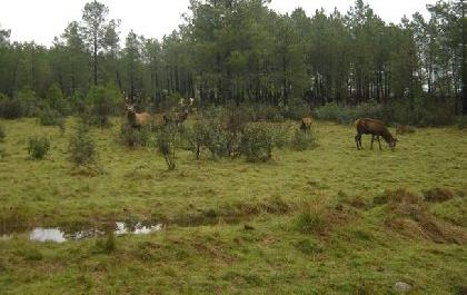 Venta de finca de caza mayor en cáceres
