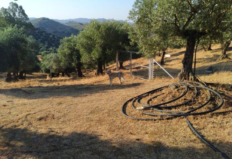 Venta de finca de olivos con casa y maquinaria en córdoba