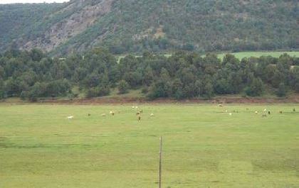 Venta de finca de secano y forestal en guadalajara