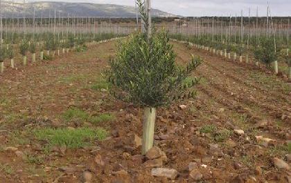 Venta de olivar de regadío en ciudad real