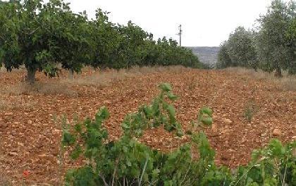 Venta de parcela de olivos e higueras en toledo