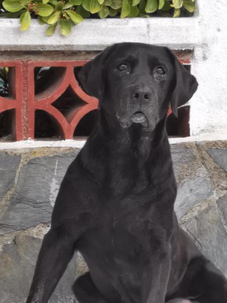 Paseadora de perros/ cuidadora de mascotas