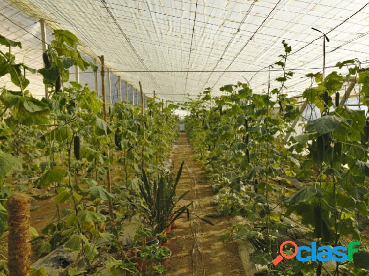 Se vende parcela de 2.795 mt2 con invernadero en producción