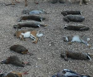 Coto de caza menor en cuenca