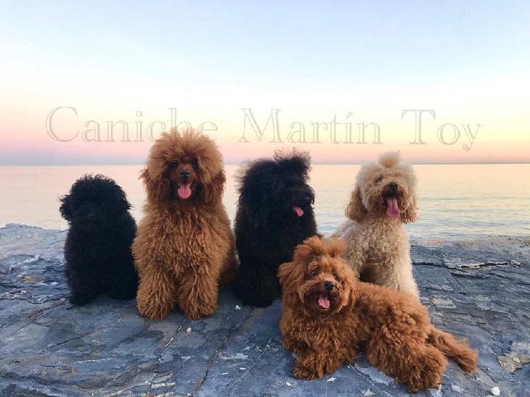 Guarderia canina / málaga