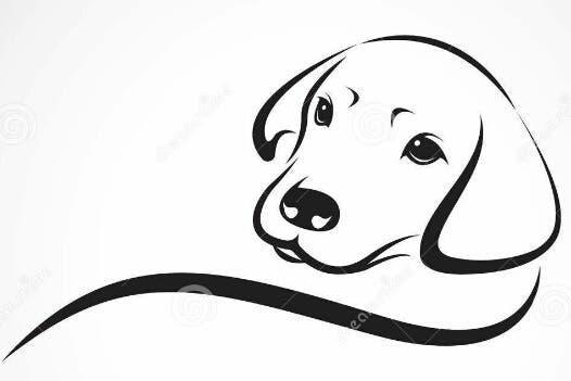 Paseo cuidado y guardería de perros y mascotas