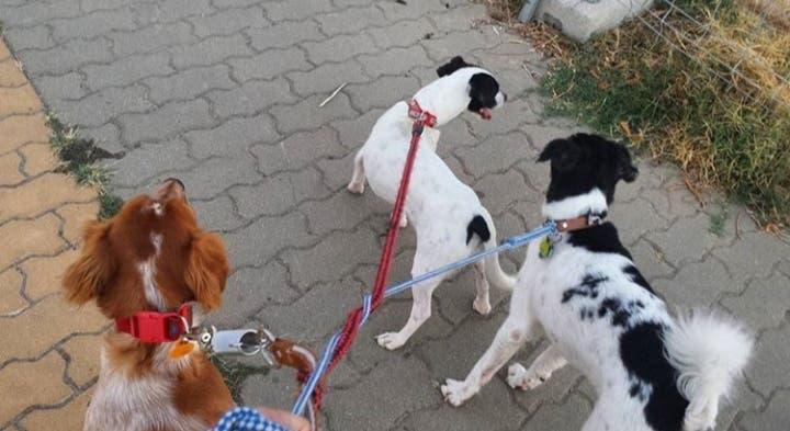 Cuidadora de animales (tambien paseo perros)