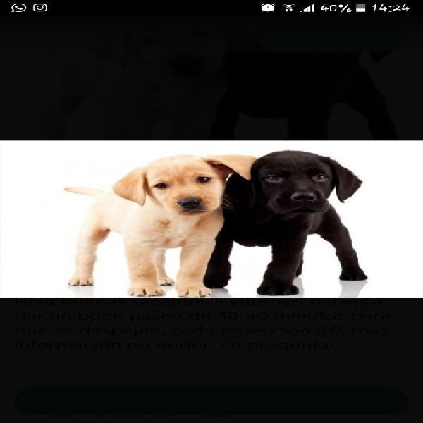 Paseo de perros jaén capital