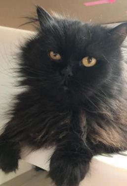 Bram stoker gatito 5 años adopción