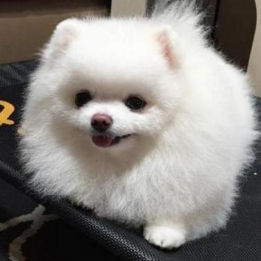 Cachorro joven listo para un nuevo hogar