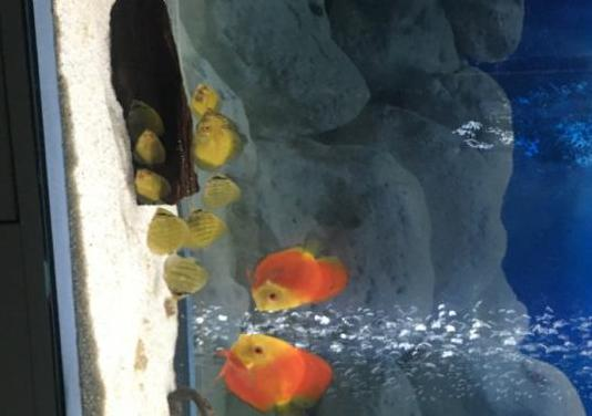 Cambio peces disco por iphone