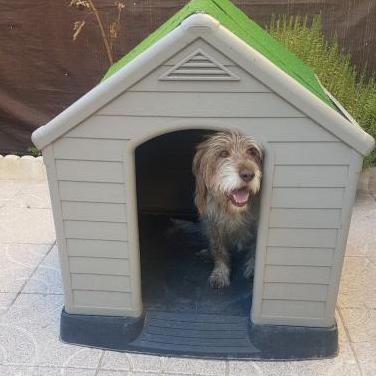 Caseta de resina para perro grande