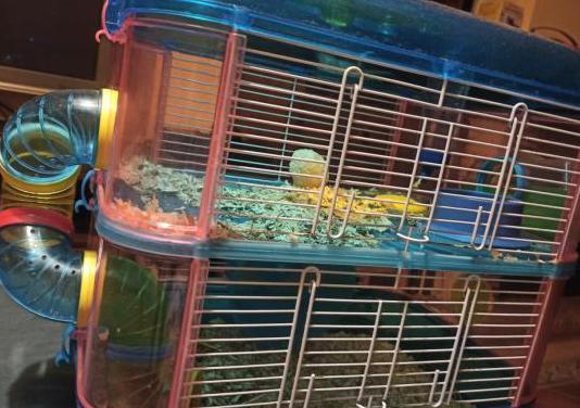 Hamster con jaula