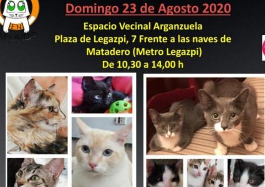 Jornada adop. felina, madrid domingo 23/08