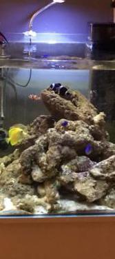 Acuario marino cúbic