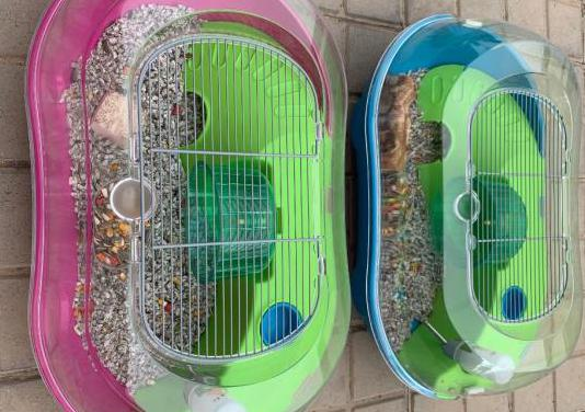 Jaula hamster ruso